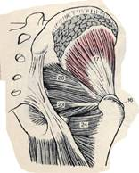 media/anca.jpg